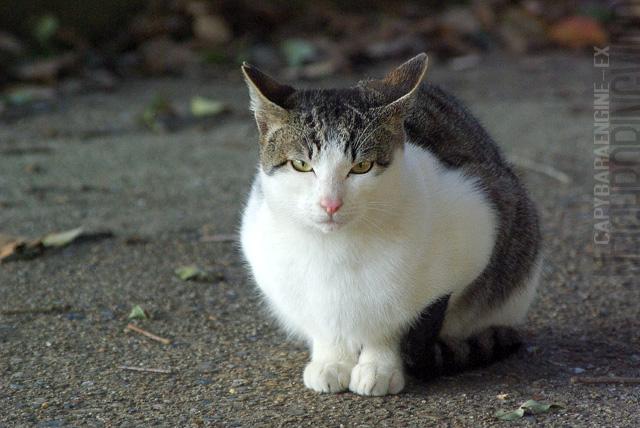 kouencats02_20100422192808.jpg