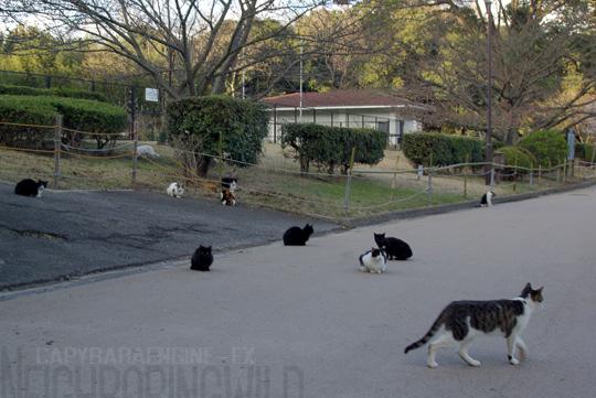 kouencats04.jpg