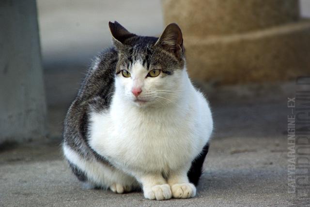 kouencats05.jpg