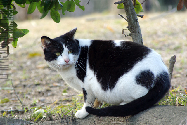 kouencats07.jpg