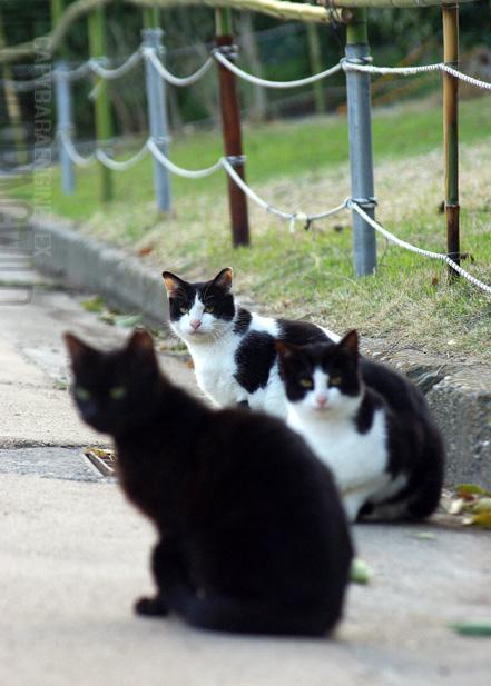 kouencats08.jpg