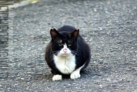 kouencats10.jpg