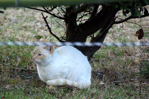 kouencats11.jpg