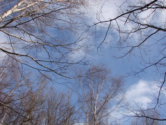 冬の森へ 050