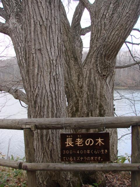 2度目の森 002