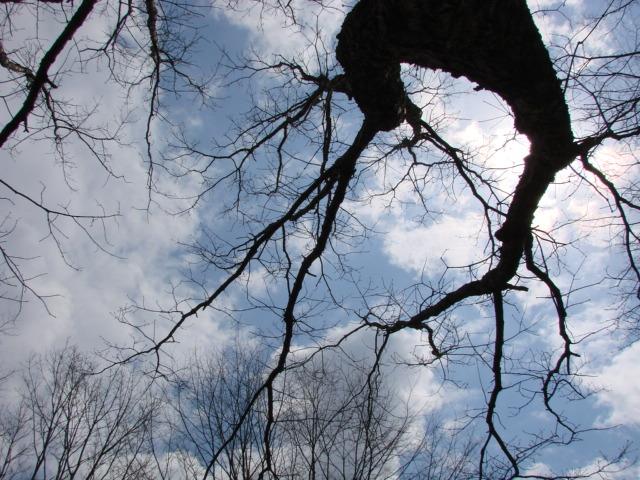 2度目の森 004