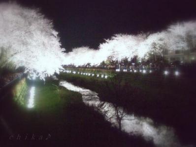 ★幻影夜桜 ロゴ640