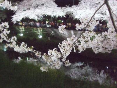 枝垂れ桜幻想 ロゴ640