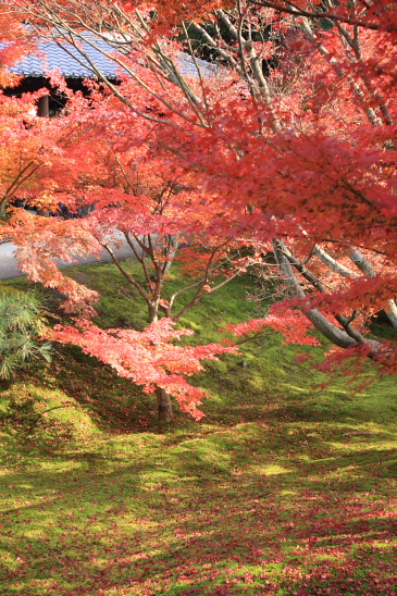 京都 09.11.270029