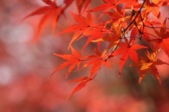 京都 09.11.270058