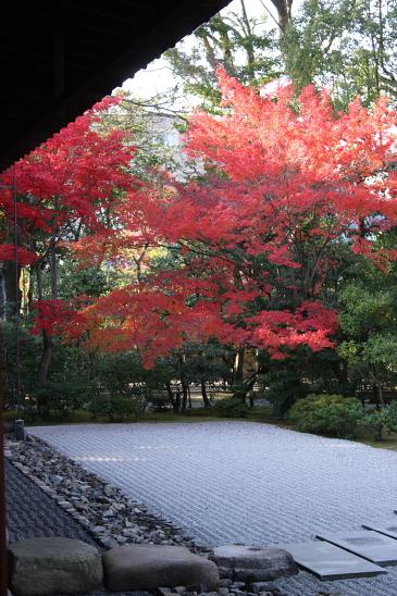 京都 09.11.270079