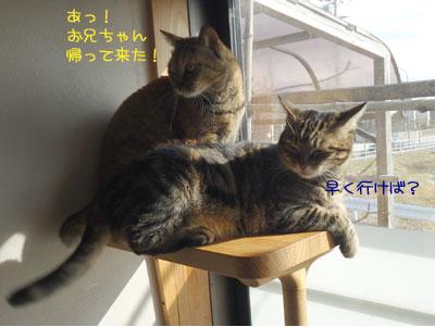 chami_koma39.jpg