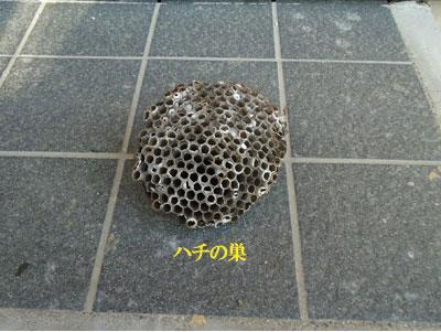 musuko4.jpg