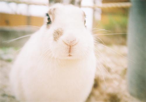 ウサギさん2