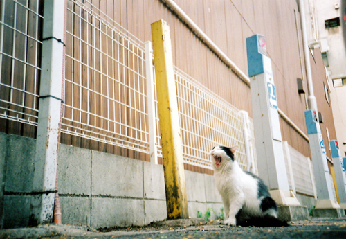 あくびネコ