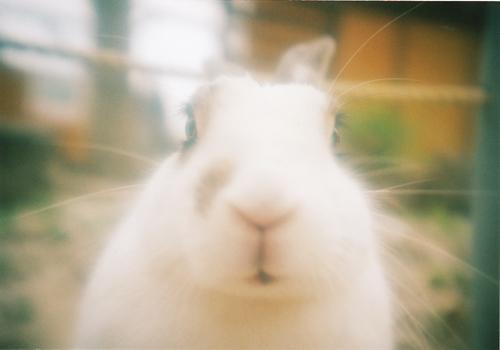 ウサギさん3