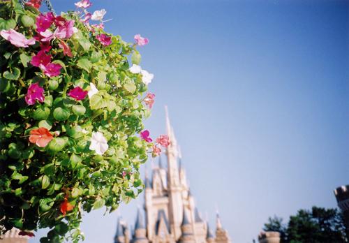 花とシンデレラ城