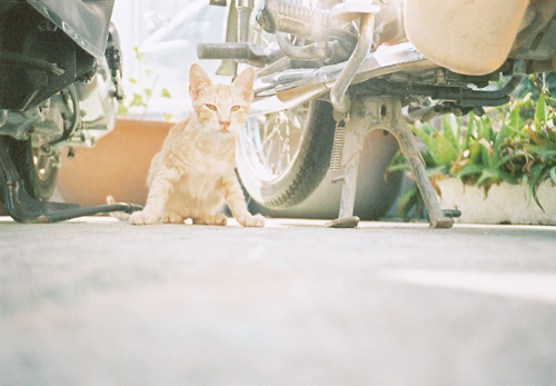 ネコさんとバイク