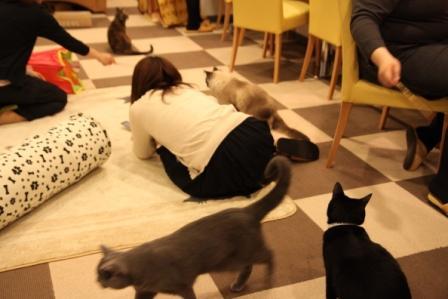 ナイト猫カフェ20100428