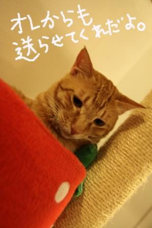 ちゃんぷ20100623