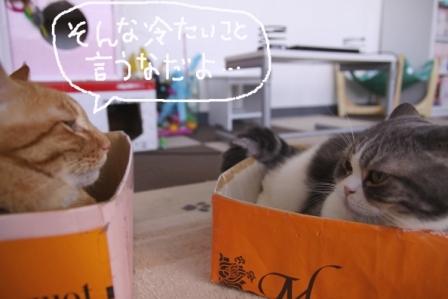 ちゃんぷ20100718-2