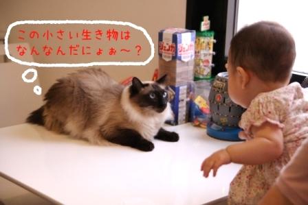 あぽろ20100912
