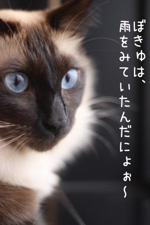 あぽろ20100923-2