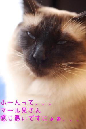 あぽろ20100923-5