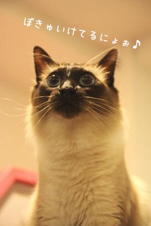 あぽろ20101108-2