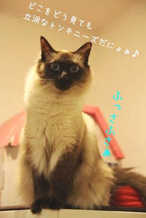 あぽろ20101108-3