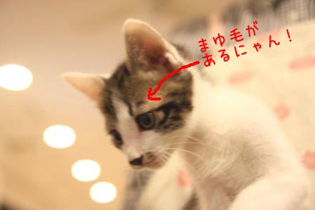ひげちゃん20101122-2