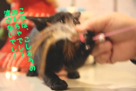 こしろう20101130-2