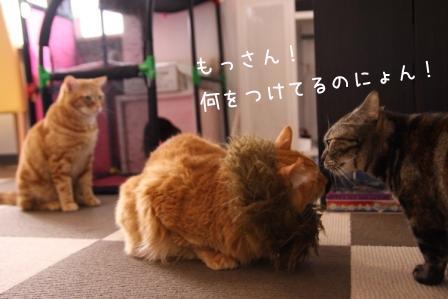 もっさん20101203-6