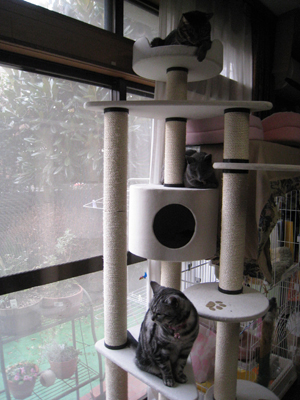猫タワー4