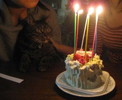 h22みゆき誕生日