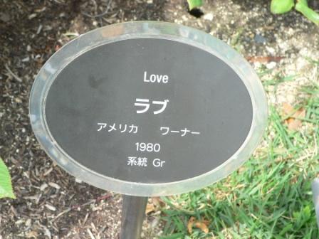 中之島ばら園 8