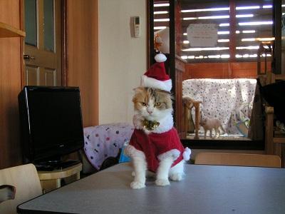 固まったサンタ猫
