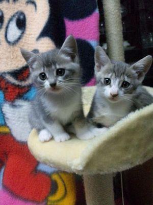 0422子猫2