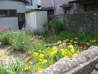 のぞき花壇