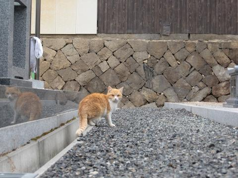 忍者猫さん
