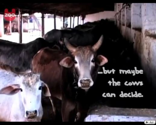 牛おしっこ