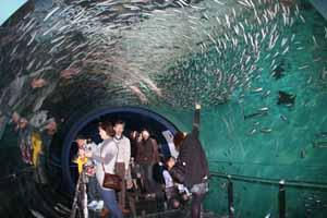海中トンネルブログ