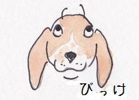 11.24 びっけ11