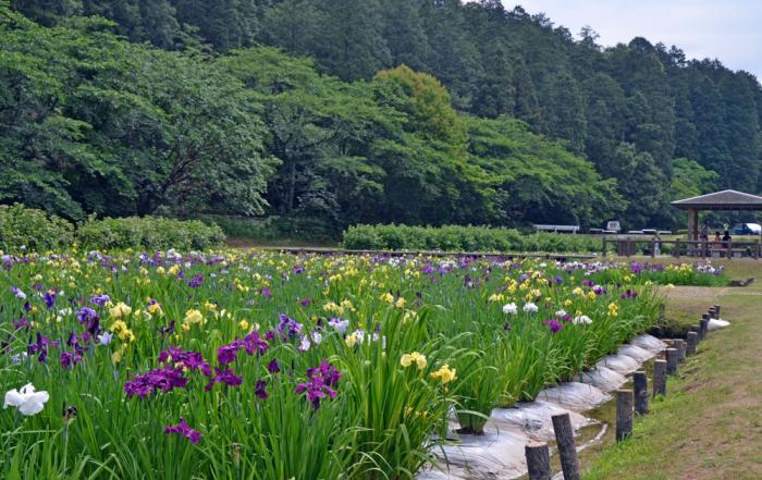 池田池公園1