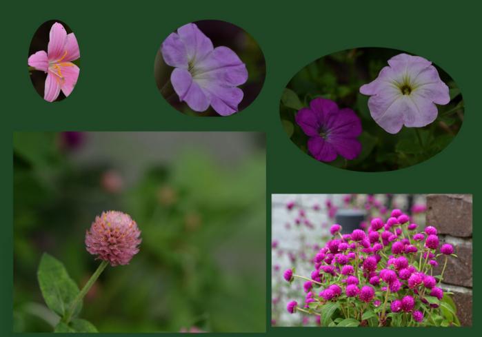 我が家の花6