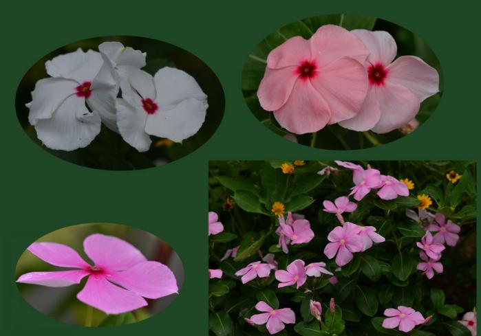 我が家の花5