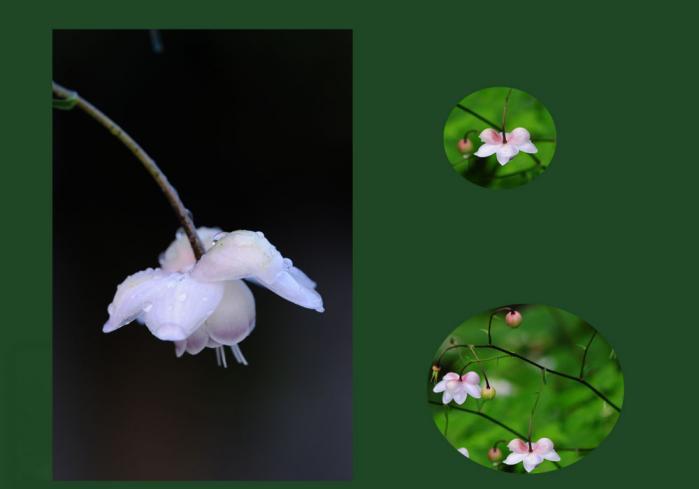 我が家の花4
