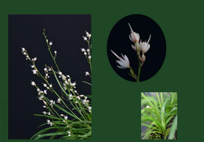 我が家の花3