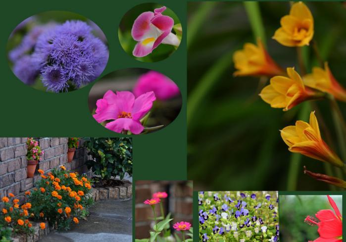 我が家の花7