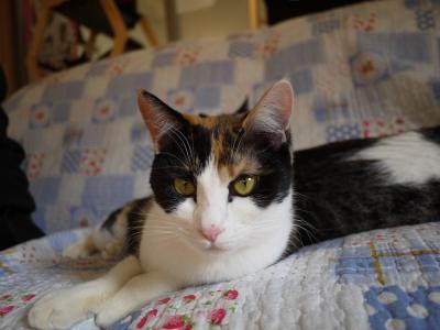 美猫ミケコ